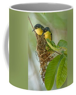 Close-up Of Two Common Tody-flycatchers Coffee Mug