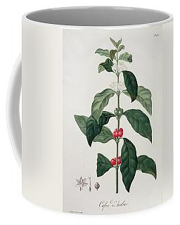 Coffea Arabica From Phytographie Coffee Mug