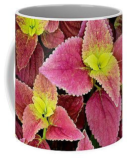 Coleus Colorfulius Coffee Mug by David Lawson