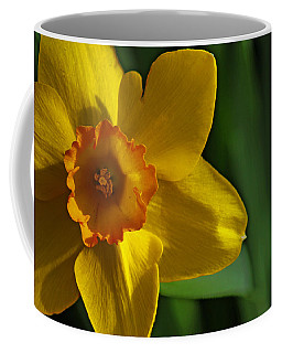 Coffee Mug featuring the photograph Color Of Spring by Rowana Ray