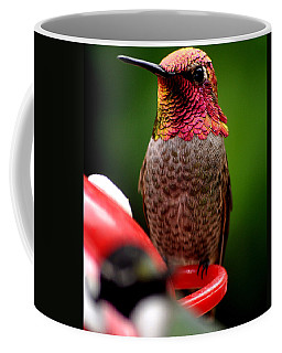 Coffee Mug featuring the photograph Colorful Male Anna Hummingbird On Perch by Jay Milo