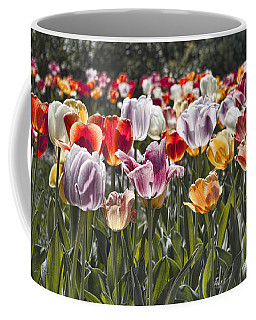 Colorful Tulips In The Sun Coffee Mug