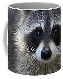 Common Raccoon Coffee Mug