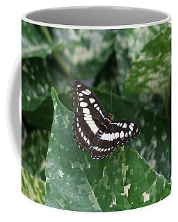 Common Sergeant Butterfly Coffee Mug