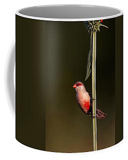 Common Waxbill Coffee Mug