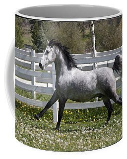 Coffee Mug featuring the photograph Conversano Catalina IIi D4000 by Wes and Dotty Weber