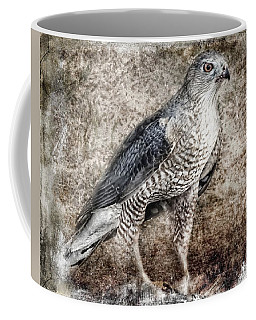 Coopers Hawk Coffee Mug