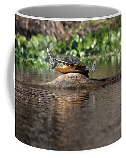 Coffee Mug featuring the photograph Cooter On Alligator Log by Paul Rebmann