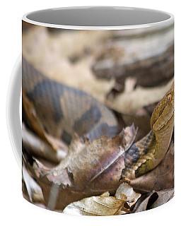 Copperhead In The Wild Coffee Mug
