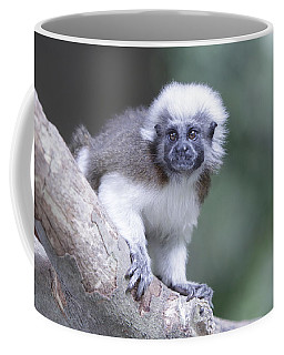 Coffee Mug featuring the photograph Cotton Top Tamarin  by Shoal Hollingsworth
