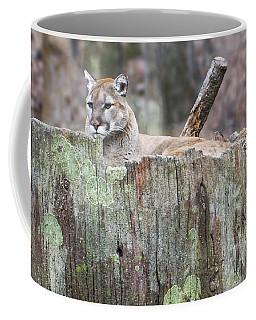 Cougar On A Stump Coffee Mug