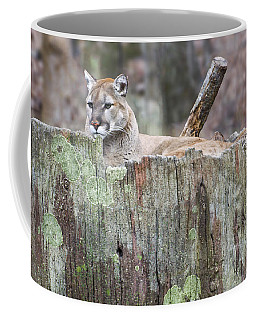 Cougar On A Stump Coffee Mug