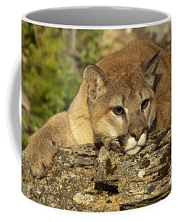 Cougar On Lichen Rock Coffee Mug