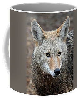 Coffee Mug featuring the photograph Coyote by Athena Mckinzie