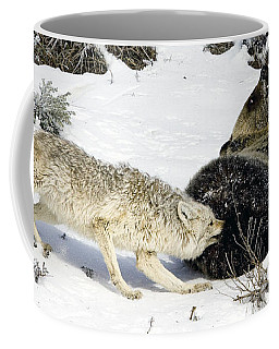 Coyote Biting A Grizzly Coffee Mug