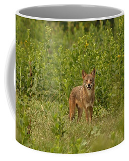 Coyote Happy Coffee Mug by Eric Liller