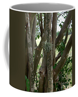 Coffee Mug featuring the photograph Crape Myrtle Growth Ball by Peter Piatt