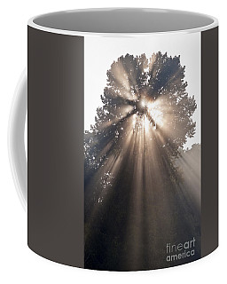 Crepuscular Rays Coming Through Tree In Fog At Sunrise Coffee Mug