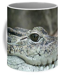 Coffee Mug featuring the photograph Crocodile Animal Eye Alligator Reptile Hunter by Paul Fearn