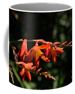Crocosmia 'dusky Maiden' Flowers Coffee Mug