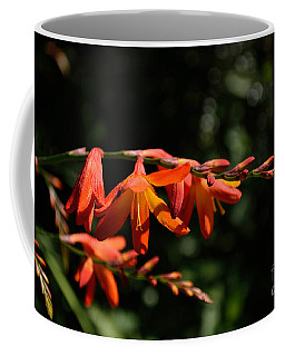 Crocosmia 'dusky Maiden' Flowers Coffee Mug