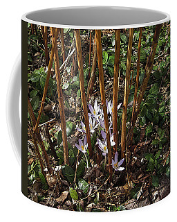 Crocuses And Raspberry Canes Coffee Mug