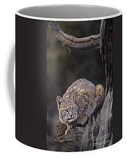 Crouching Bobcat Montana Wildlife Coffee Mug