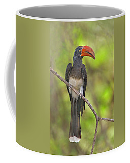 Crowned Hornbill Perching On A Branch Coffee Mug