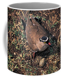 Crowned-lapwing Tending Nest Coffee Mug