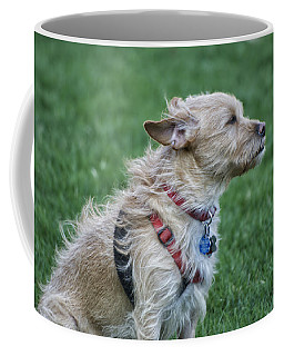Coffee Mug featuring the photograph Cruz Enjoying A Warm Gentle Breeze by Thomas Woolworth