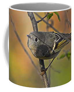 Coffee Mug featuring the photograph Curiosity by Gary Holmes