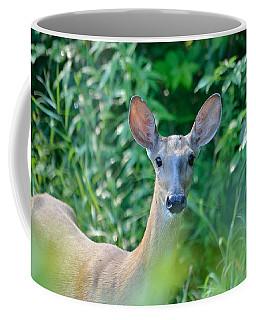 Curious Doe Coffee Mug by David Porteus