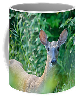 Curious Doe Coffee Mug