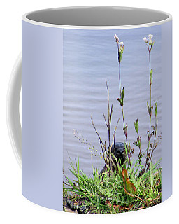 Coffee Mug featuring the photograph Curious Otter by I'ina Van Lawick