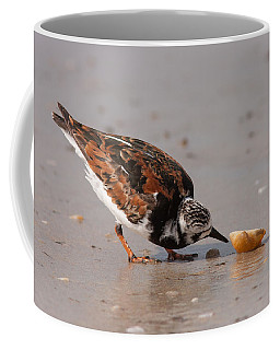 Curious Turnstone Coffee Mug