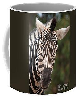 Curious Zebra Coffee Mug