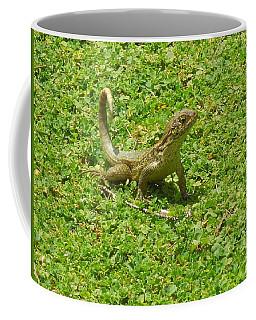 Curly-tailed Lizard Coffee Mug