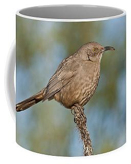 Curve-billed Thrasher Coffee Mug by Jeff Goulden