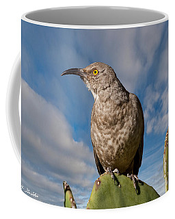 Curve-billed Thrasher On A Prickly Pear Cactus Coffee Mug by Jeff Goulden