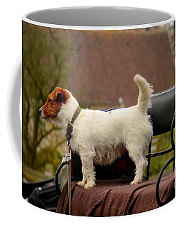Cute Dog On Carriage Seat Bruges Belgium Coffee Mug