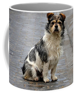 Cute Dog Sits On Pavement And Stares At Camera Coffee Mug