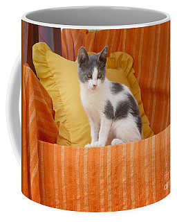 Coffee Mug featuring the photograph Cute Kitty by Vicki Spindler