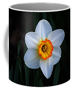 Coffee Mug featuring the photograph Daffodil In Riverside Park by Bill Swartwout