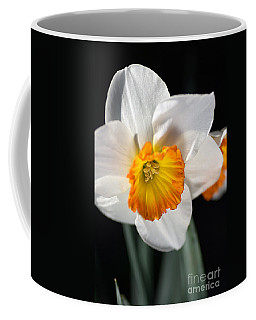Daffodil In White Coffee Mug