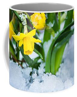 Daffodils In The Snow  Coffee Mug