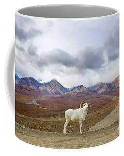 Dalls Sheep Ram Denali National Park Coffee Mug
