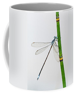 Damselfly On Horsetail Coffee Mug