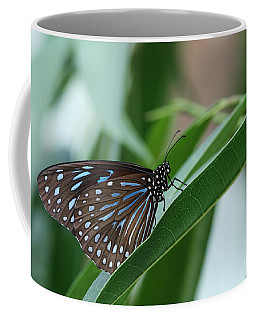 Dark Blue Tiger Butterfly #2 Coffee Mug by Judy Whitton