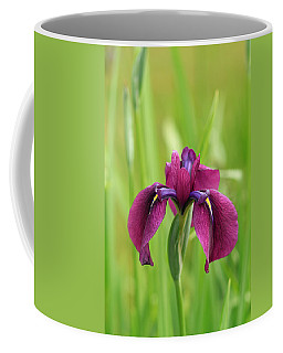 Dark Magenta Iris Coffee Mug