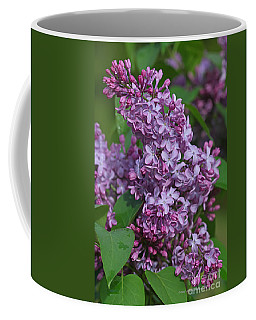 Dawns Lilacs Coffee Mug